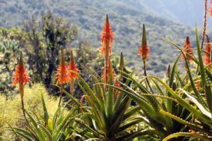 flower-Erica Devendish, Pixabay